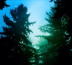 prtld Trees